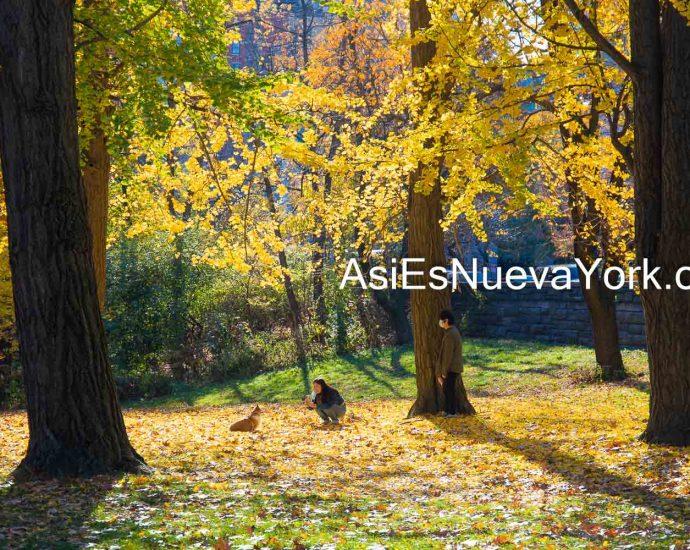 Sábado 14 de noviembre de 2020. Manhattan, ciudad de Nueva York - Árboles con hojas amarillas en otoño y una pareja y su perro o perra en el Parque Central. Foto por Javier Soriano/www.JavierSoriano.com