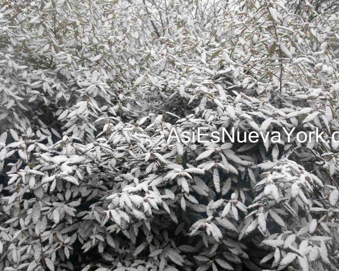 Wednesday, December 9, 2020. Brooklyn, New York City - Snowing in Prospect Park. Photo by Javier Soriano/www.JavierSoriano.com