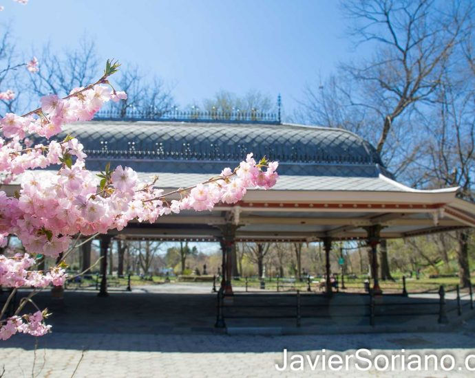Thursday, April 8, 2021. Concert Grove Pavilion and cherry blossoms in Prospect Park, Brooklyn; New York City. Photo by Javier Soriano/www.JavierSoriano.com