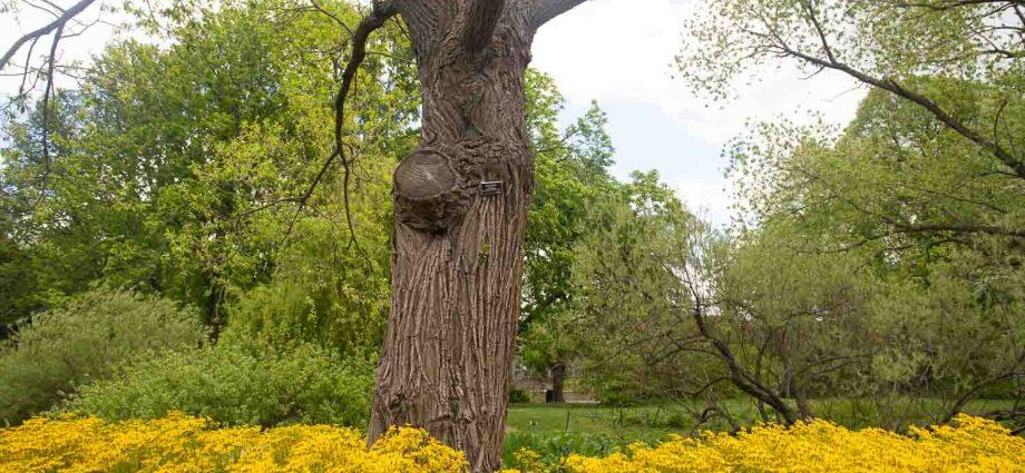 Viernes 30 de abril de 2021. Brooklyn, ciudad de Nueva York - Árbol y flores en el Jardín Botánico de Brooklyn. Foto por Javier Soriano/www.JavierSoriano.com