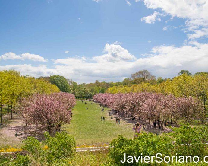 Friday, April 30, 2021. Brooklyn, New York City - Brooklyn Botanic Garden. Photo by Javier Soriano/www.JavierSoriano.com